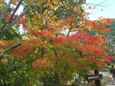 城峯公園 紅葉