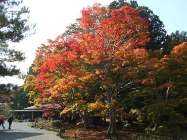 福島 浄楽園 紅葉の名所