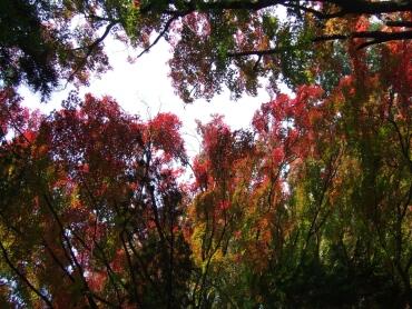 黒岩虚空蔵の紅葉