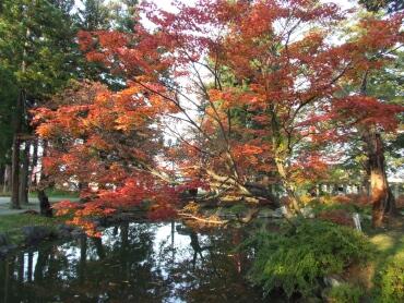 松が岬公園 紅葉