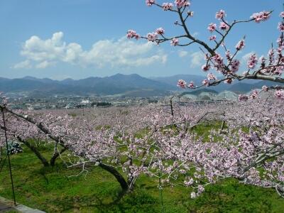 桃の風景 塩山