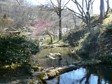 聞修院 庭園