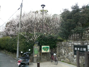 岡本公園の梅