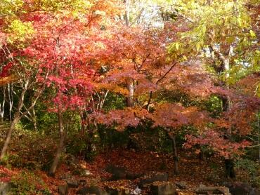 岡本公園 紅葉