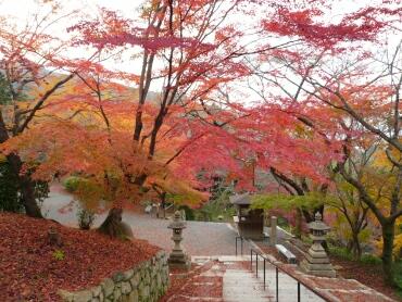 園城寺の紅葉