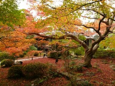 青蓮院の紅葉