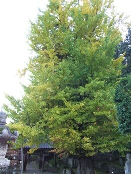 珍蔵寺の紅葉