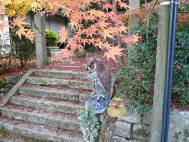 長寿寺の紅葉