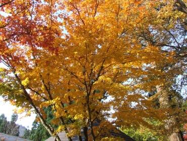 若松寺の紅葉