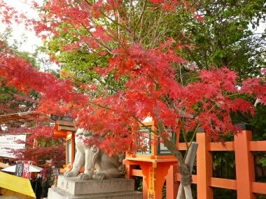 八坂神社 紅葉