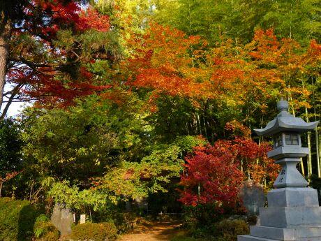 2竹寺 紅葉2012 01.jpg