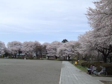 王公園1.jpg