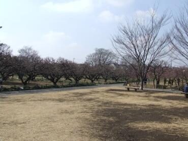 越谷梅林公園.jpg