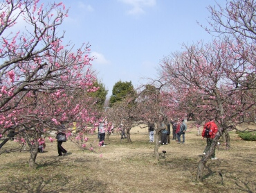 越谷梅林公園3.jpg