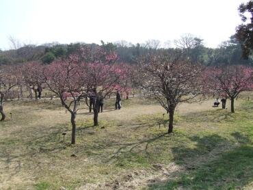 越谷梅林公園4.jpg
