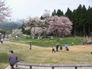 釜の越桜4.jpg