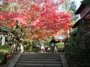 鎌倉宮紅葉1.jpg