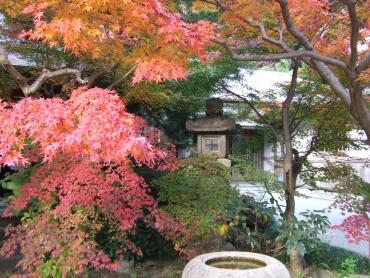 覚園寺紅葉2.jpg