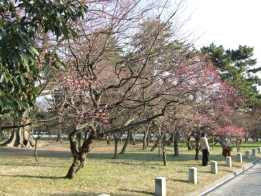 京都御苑梅園1.jpg