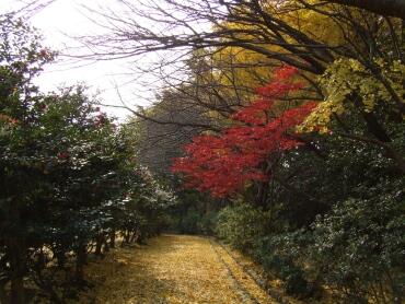 源氏山公園紅葉2.jpg