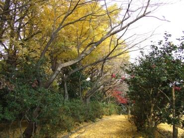 源氏山公園紅葉3.jpg