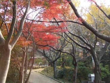 源氏山公園紅葉1.jpg
