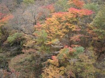 吾妻渓谷紅葉2.jpg