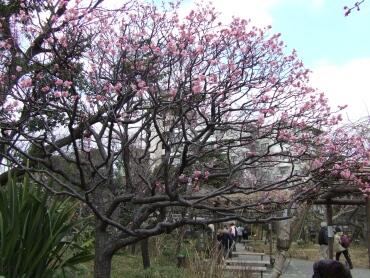 向島百花園2.jpg
