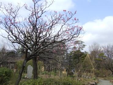向島百花園3.jpg