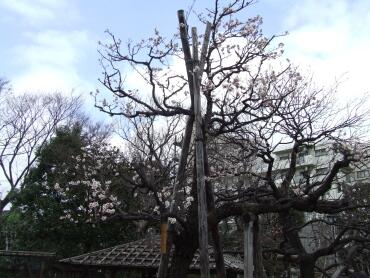 向島百花園4.jpg