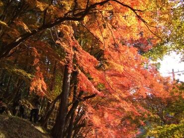 香嵐渓紅葉4.jpg