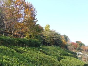 高崎市染料植物園.jpg