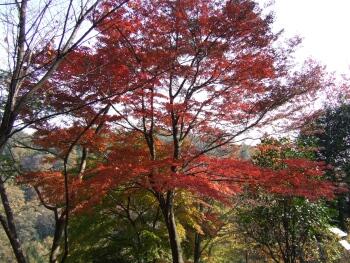 高崎市染料植物園1.jpg
