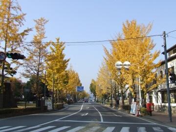 高崎城前の紅葉.jpg