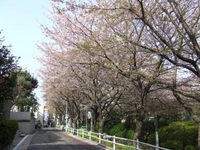 桜坂3.jpg
