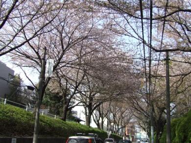 桜坂2.jpg