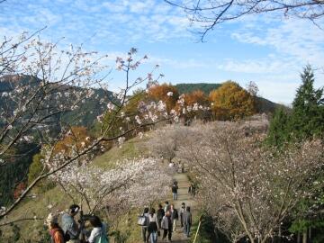 桜山公園_冬桜4.jpg