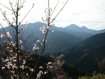 桜山公園_冬桜2.jpg