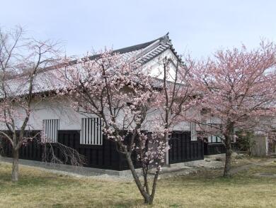 小峰城の桜2.jpg