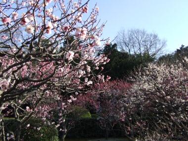 小野梅園3.jpg