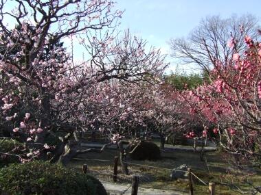 小野梅園1.jpg