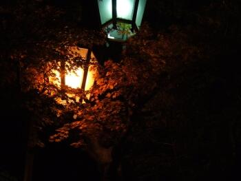渋温泉夜景3.jpg