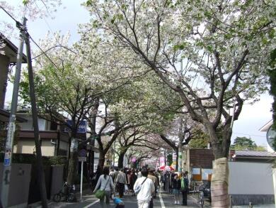 成城の桜2.jpg
