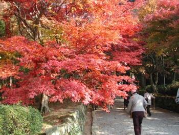 西明寺湖東三山紅葉1.jpg