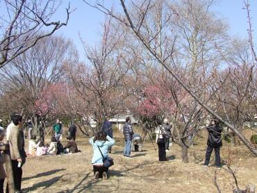 大宮第二公園の梅4.jpg