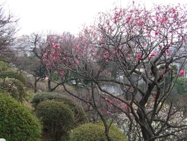 大田区立池上梅園.jpg