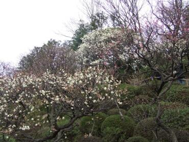 大田区立池上梅園2.jpg