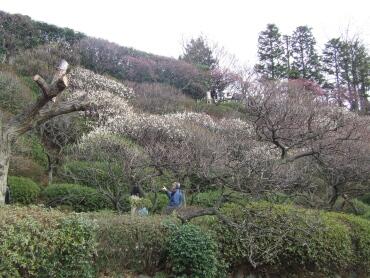 大田区立池上梅園1.jpg
