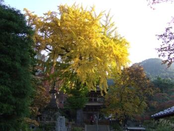 前山寺三重塔2.jpg