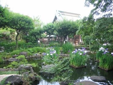 長谷寺菖蒲園2.jpg